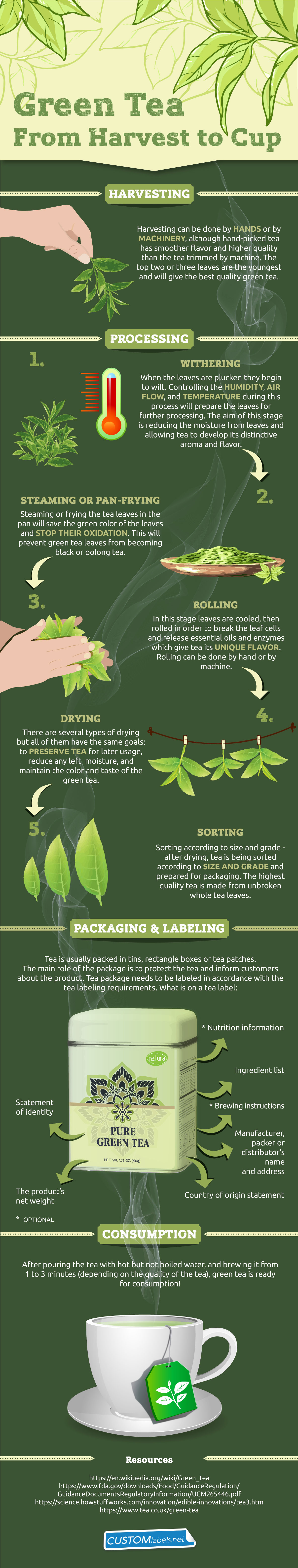 green-tea-production-journey-infographic